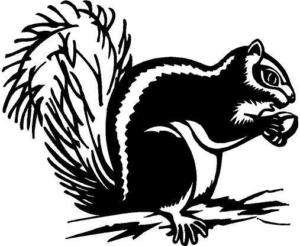 Squirrel Vinyl Decal Car Truck Trailer RV Sticker 25
