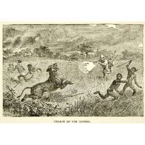 1884 Wood Engraving Lioness Hunt Native Big Game Africa